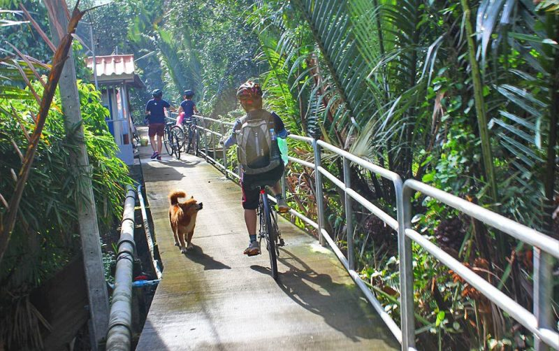 Tour xe đạp Jungle Bicycle - Ảnh 5
