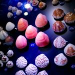 Bảo tàng vỏ ốc Bangkok Seashell Museum